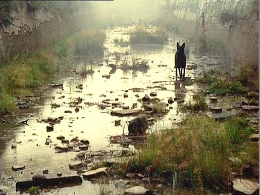 Kuva Tarkovskin elokuvasta Stalker