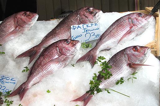 Kalaa Ateenassa 8.11.2010