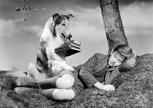 Lassie palaa kotiin, elokuvaversio 1943.