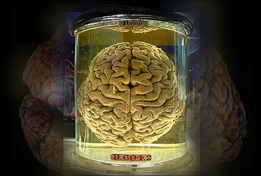 Ihmisaivot (kirjoittajan manipulointi Gaetan Leen kuvasta)